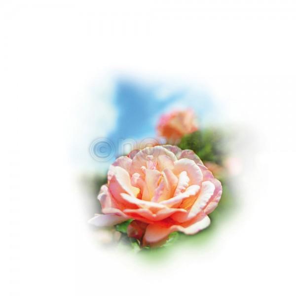 "Medisana Aroma Essenz ""Rose"""